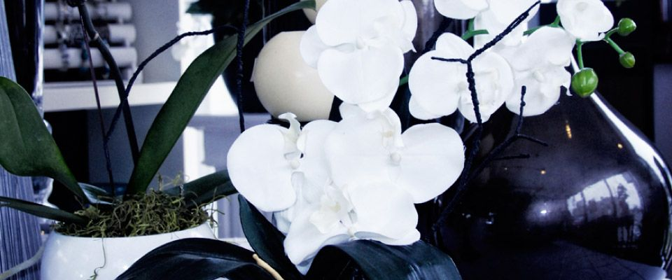 Gifts & More - White flowers and black vases